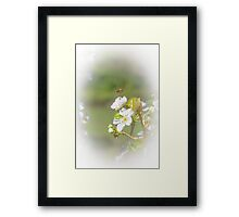 Hovering Bee Framed Print