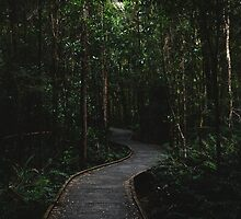 Forest Path by ladgrove