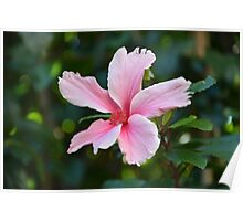 SINGLE PINK HIBISCUS Poster