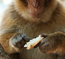 Portrait of a macaque by sedeer