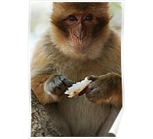 Portrait of a macaque Poster