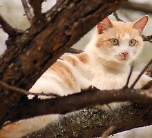 """GINGER AND HIS """"SUNSHINE"""" SPOT by Magaret Meintjes"""