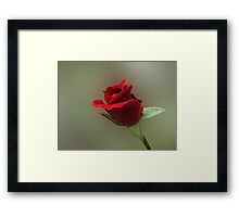 Red Rosebud Framed Print