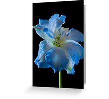 delphinium flower Greeting Card