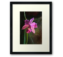 orchid luxury Framed Print