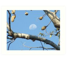 Moony Boab Art Print