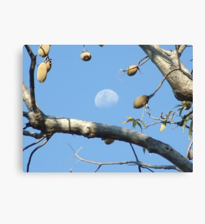 Moony Boab Canvas Print