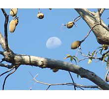 Moony Boab Photographic Print
