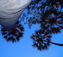 Livistonia palm canopy at Wuggubun Gorge by mickmci
