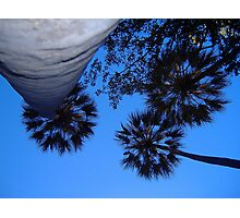 Livistonia palm canopy at Wuggubun Gorge Photographic Print