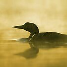 Into the fog - Common Loon by Jim Cumming