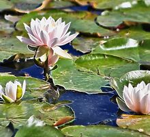 WATERLILY AND PADS by cdudak