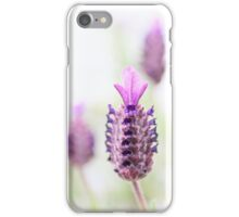 Lavandula Stoechas iPhone Case/Skin