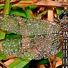 Diamond Dragonfly Brooch by kaw209