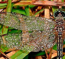 Diamond Dragonfly Brooch by kaw209