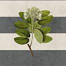 botanical stripes 5 by beverlylefevre