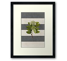 botanical stripes 5 Framed Print