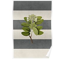 botanical stripes 5 Poster