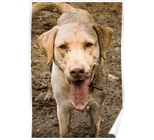 Mud Dog Poster
