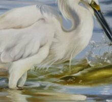 Snowy Egret Hunting Shrimp Sticker