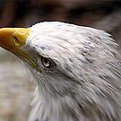 Eagle by Lori Walton
