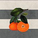 botanical stripes 6 by beverlylefevre