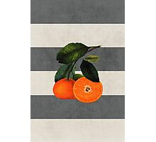 botanical stripes 6 Photographic Print
