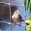Bird on a Fence by Lori Walton