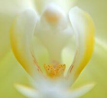 Lemon Drops by Bill Morgenstern