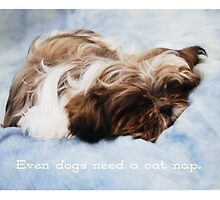 Even dogs need a cat nap.  by Ella Hall
