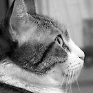 Oscar Profile by Leigh Ann Pobiak