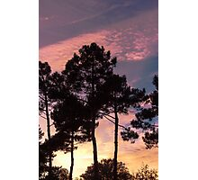 Sunset - Clouds, wind and trees Photographic Print