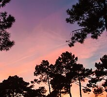 Sunset - Clouds, wind and trees #3 by Mathieu Longvert