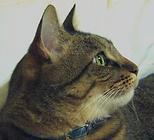 Monkey Profile by PhotosbyNan
