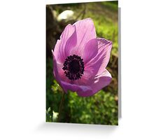 One Delicate Purple Anemone Coronaria Flower Greeting Card