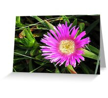 Pink Mesembryanthemum Greeting Card