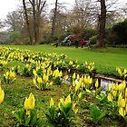 Easter In Savill Gardens by lezvee