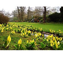 Easter In Savill Gardens Photographic Print