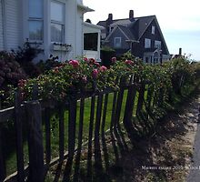 Lighthouse Road Watch Hill, Wild Roses on a Wooden Fence by Maureen Zaharie