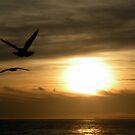 Sunset Flight by Shaina Haynes