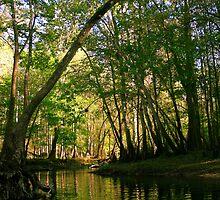 Springtime in Florida by MMerritt