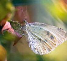 Sweet Butterfly Dreams by Selina Tour