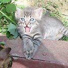 Cat by erdogan49