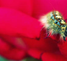 Mo the Caterpillar  Sticker