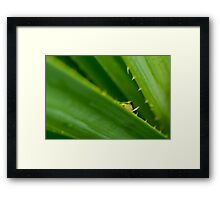 Northern Dwarf Tree Frog Framed Print