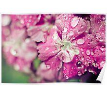 Pink Flower Droplets Poster