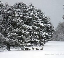 Canadian Geese playing in the Snow by Maureen Zaharie