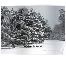 Canadian Geese playing in the Snow Poster