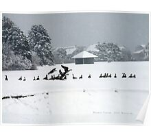 Canadian Geese playing in the Snow 2 Poster