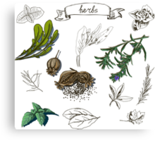 illustration set with hand drawn herbs Canvas Print